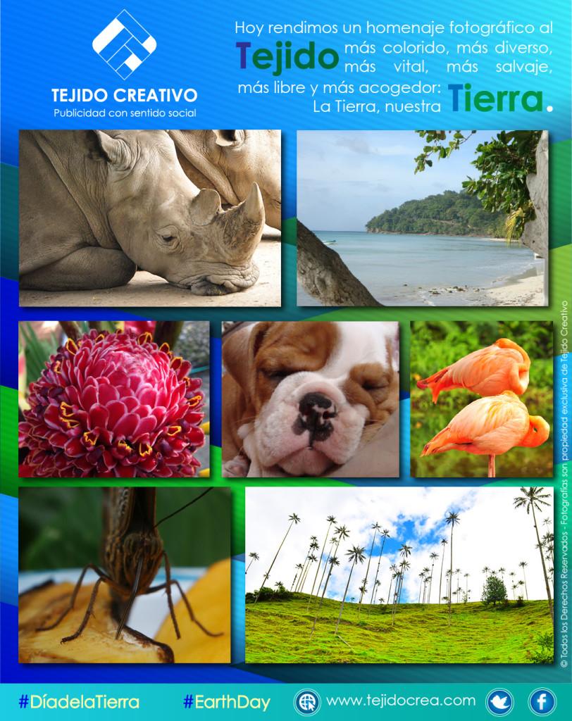 rinoceronte, playa. perro, flor, mariposa palmas, flamencos, día de la tierra
